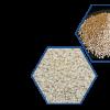 Sesame Seeds / Hulled Sesame Seeds